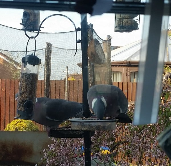 Stampin' Up! Floral Rectangular Milk Carton Tutorial Crazy Pigeons