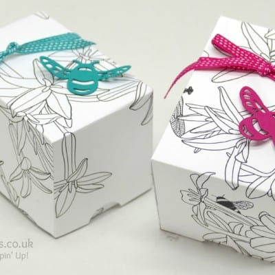 Sale a Bration Free Inside the Lines Paper Box