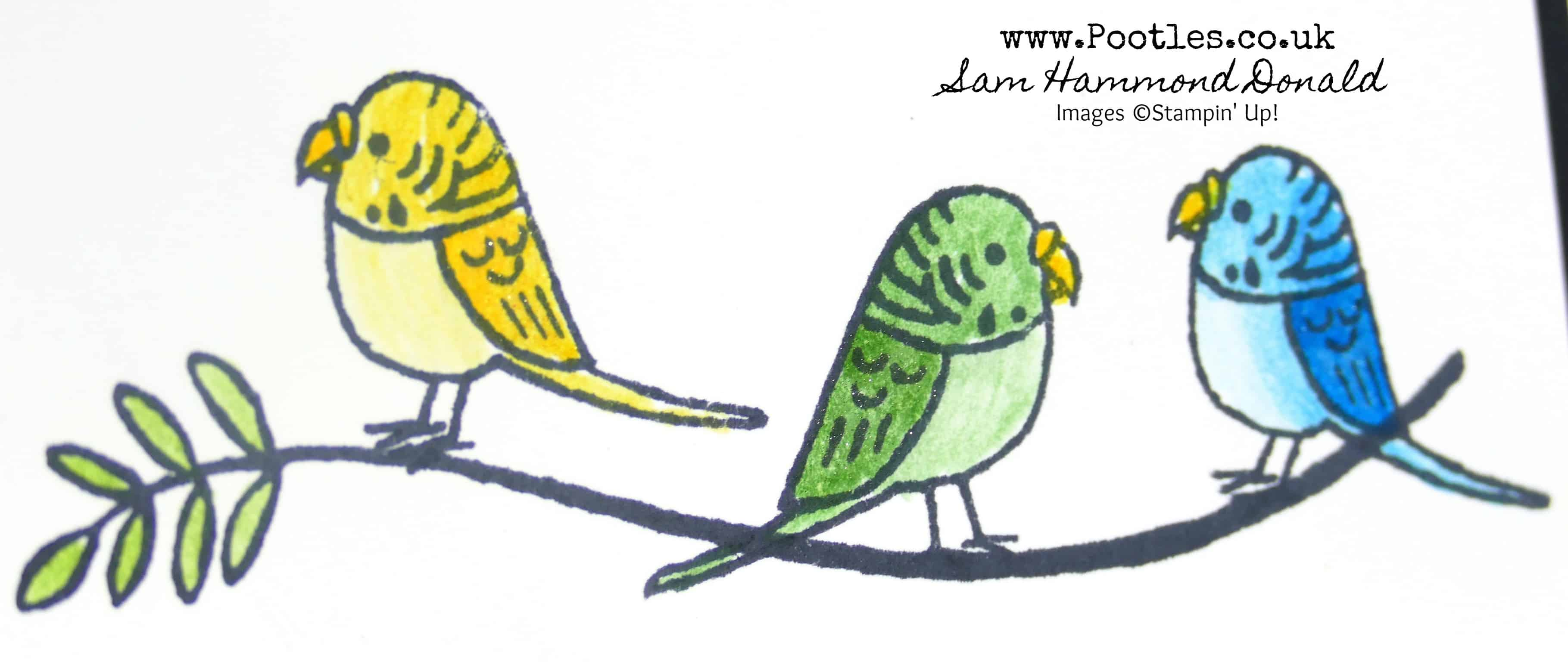 A Rainbow of Budgies from Bird Banter