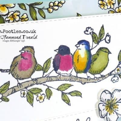 Free as a British Garden Bird Ballad