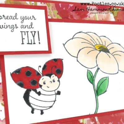 Little Ladybug Sale a Bration Sneak Peek