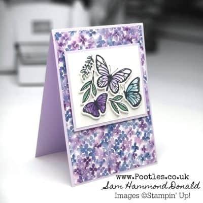 Beautiful Butterfly Floating & Fluttering
