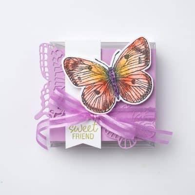 Three On Thursday – Butterfly Brilliance