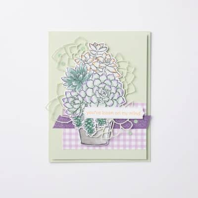 Three on Thursday – Simply Succulents