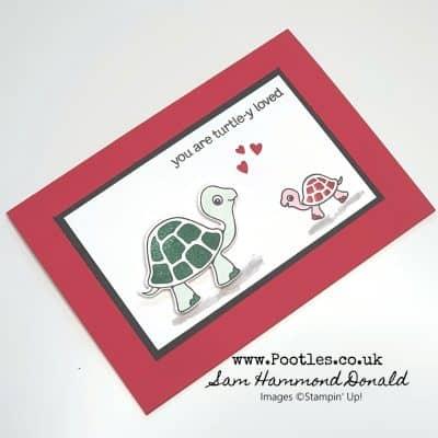 Turtle Friends are in Love!