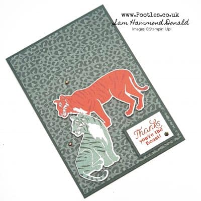 Wild Cats For a Great Guy Card
